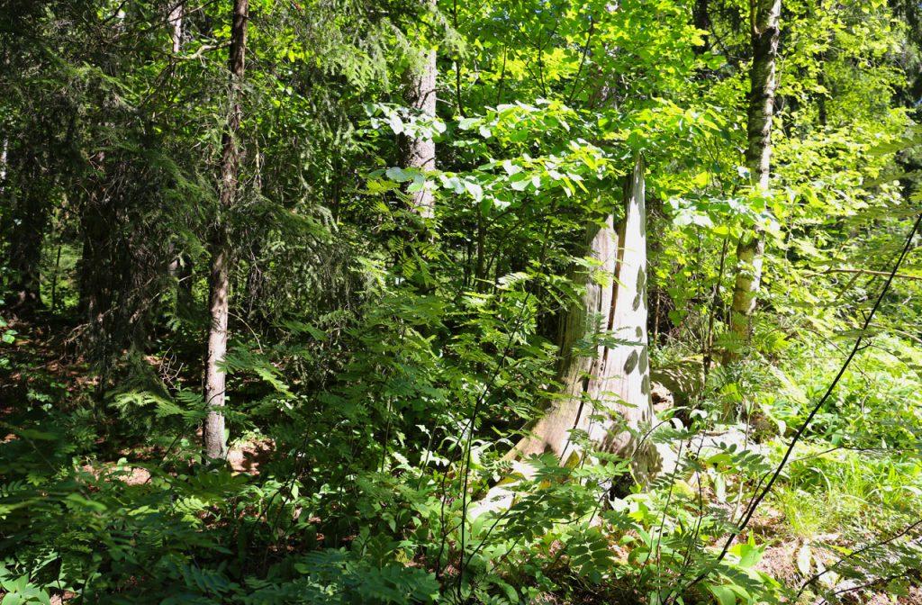 Metsän aika -kalenterin lahja luonnolle