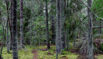 Metsän aika kalenteri 2022 lahjoitus luonnolle